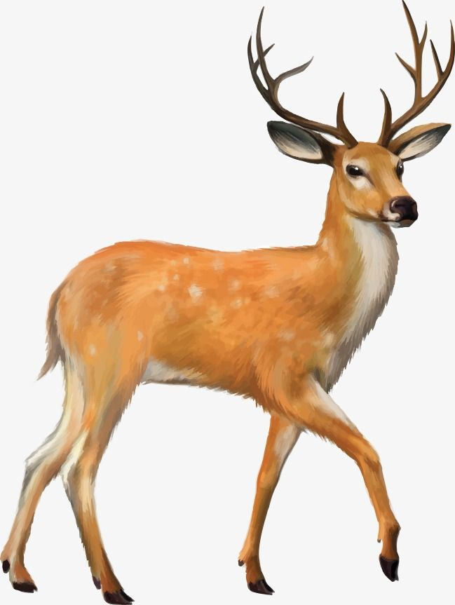 Deer, Deer Vector, Vector PNG Transparent Clipart Image and.