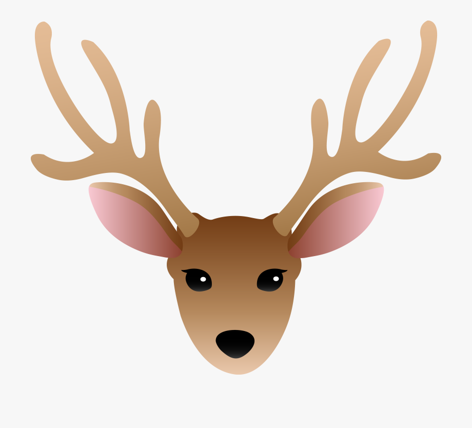 Face Of A Male Deer.