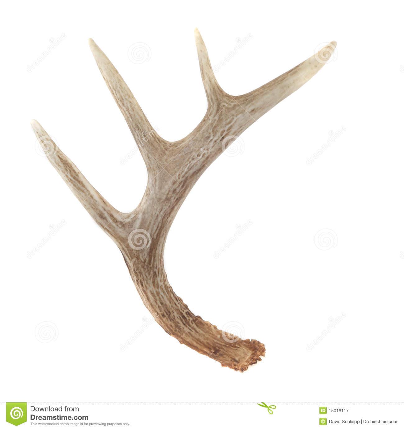 Deer Horn Clipart.