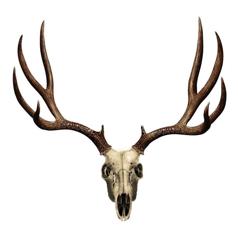 Deer antler skull clip art.
