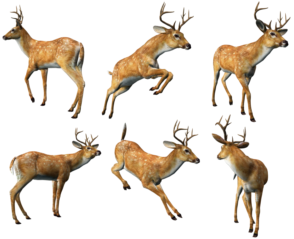 3D Deers Collection PNG Clipart.