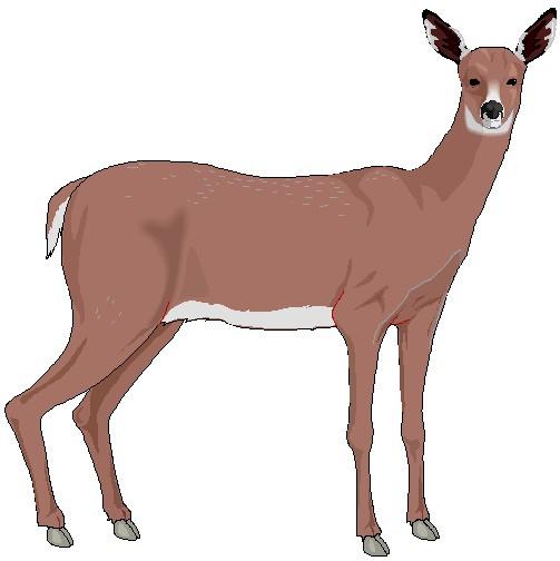 Clip art deer clipart 2.