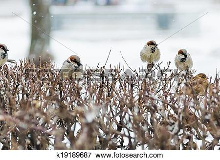 Picture of shelter of small defenceless sparrow birds family.
