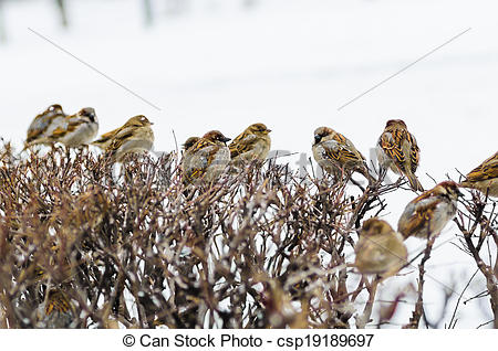 Stock Photographs of shelter of small defenceless sparrow birds.