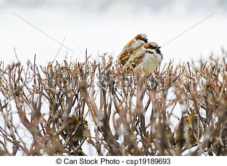 Stock Photographs of shelter of small defenceless sparrow birds.