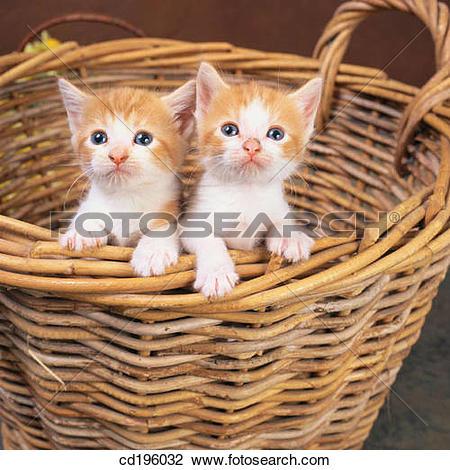 Stock Photo of basket, defenceless, couple, cat, animal cd196032.
