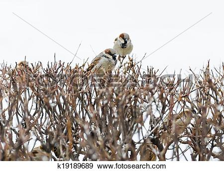 Stock Photograph of shelter of small defenceless sparrow birds.
