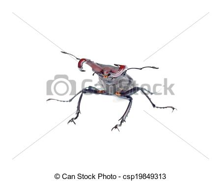 Vector Clip Art of Stag beetle in a defensive position, isolated.