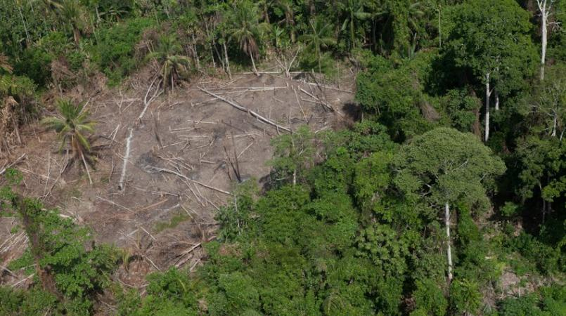 Rate of deforestation decreasing in PNG.
