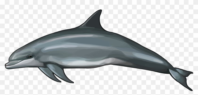 Delfin Png, Transparent Png.
