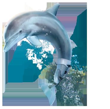 La gran aventura de Winter el delfín.