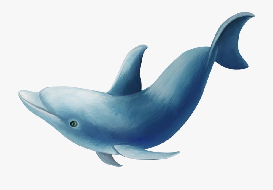 Common Bottlenose Dolphin Clip Art.