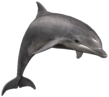 Delfín png 2 » PNG Image.