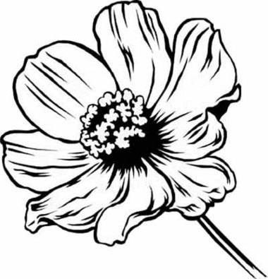Beautiful Flower Coloring Pages With Delicate Forms Of Natural.