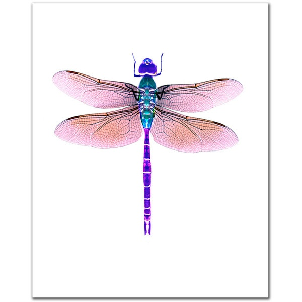 1000+ images about Dragonfly Illustrations on Pinterest.