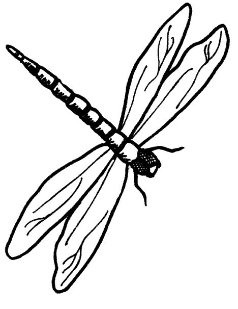 Dragonfly Outline.