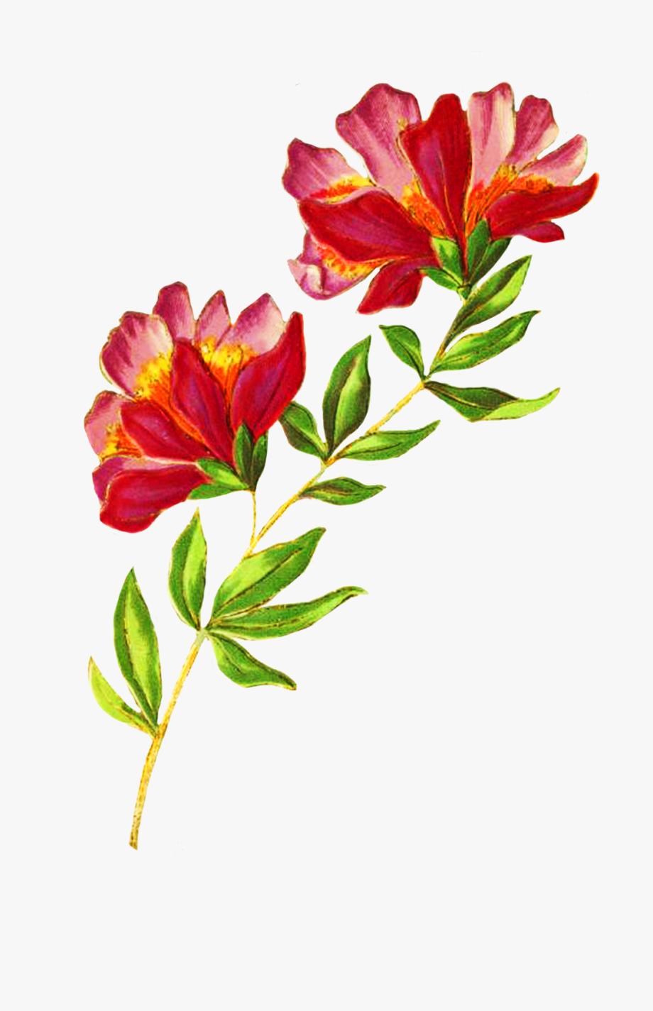 Digital Scrapbooking Flowers, Beautiful Delicate Flower.