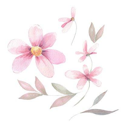 Delicate floral set. Watercolor flowers Clipart Image.