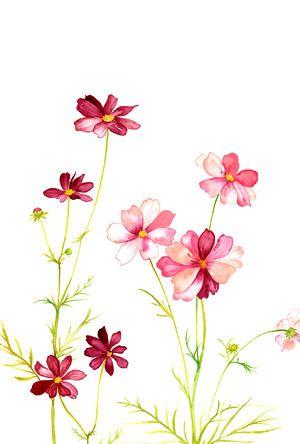 Delicate flower clipart.