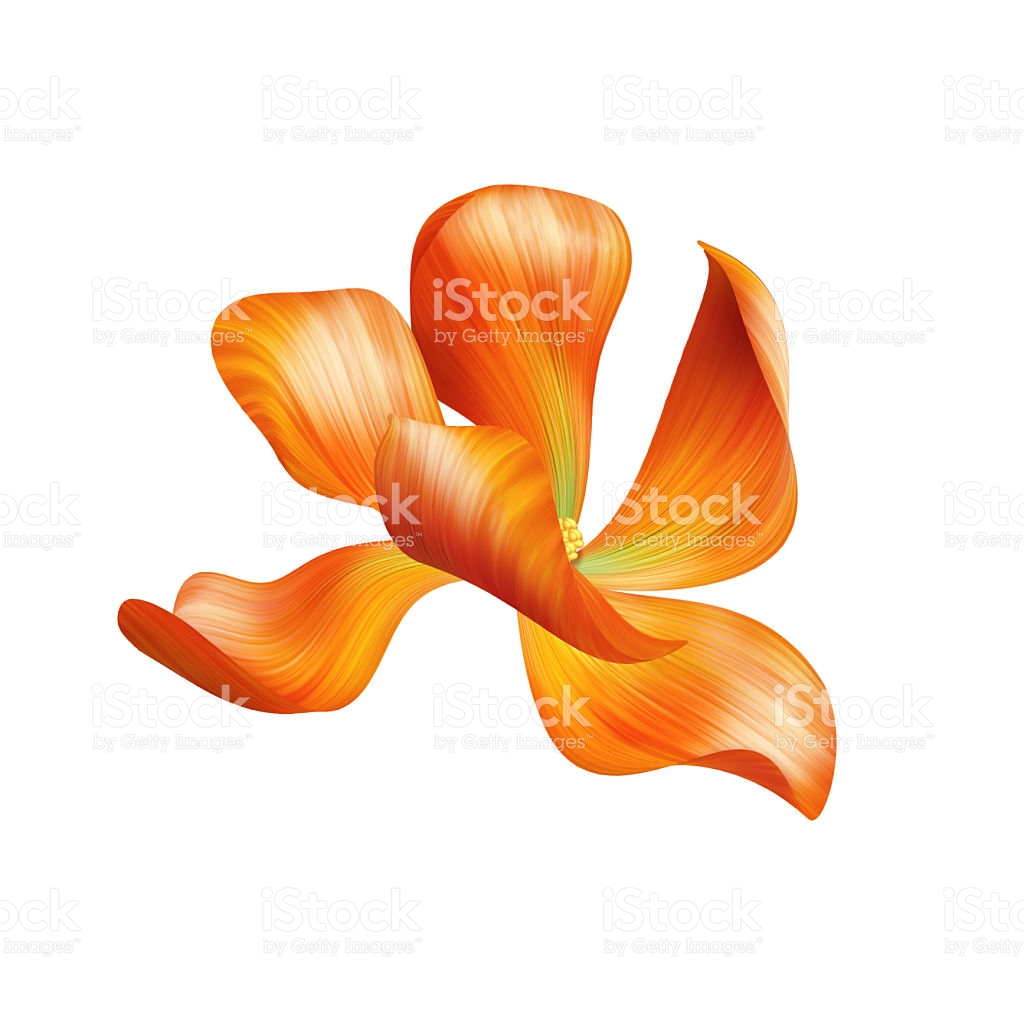 Abstract Delicate Orange Flower Illustration Isolated stock vector.