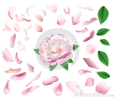 Floral Background Pink Peony Delicate Petals Stock Illustrations.