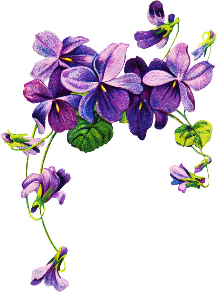 1000+ ideas about Violet Flower Tattoos on Pinterest.