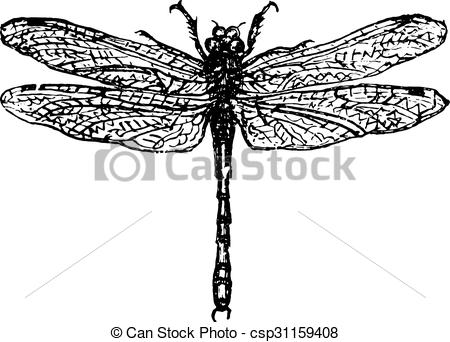 Vector Clipart of Demoiselle or dragonfly, vintage engraving.