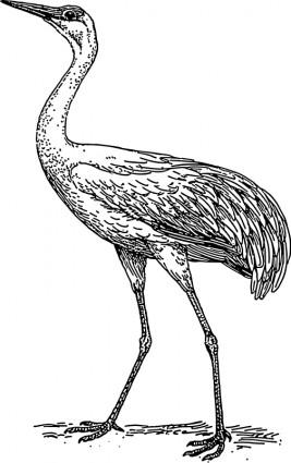 Demoiselle crane Free Vector / 4Vector.