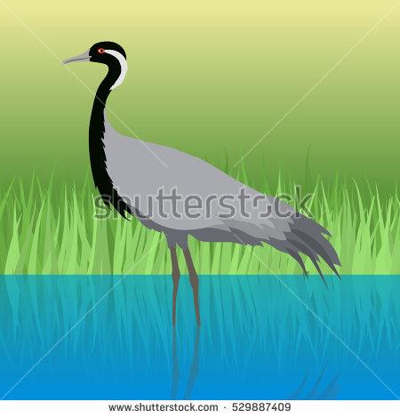 Crane Beak Stock Photos, Royalty.