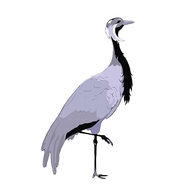 Demoiselle Crane Clip Art, Vector Images & Illustrations.