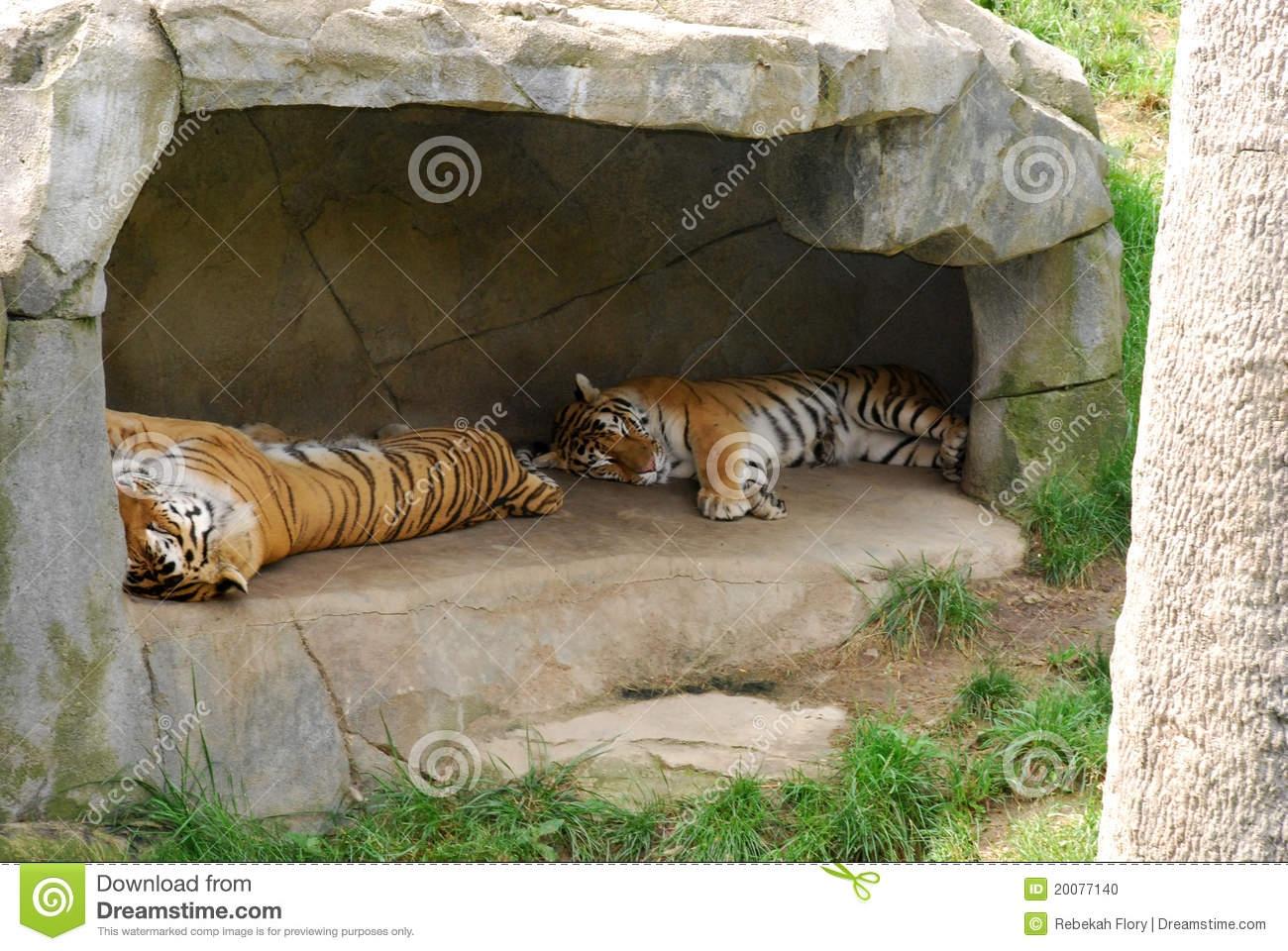 Tiger den clipart.