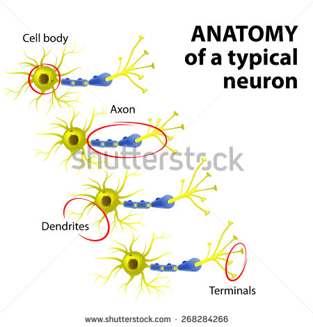 Dendrites Stock Photos, Royalty.