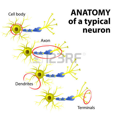 1,238 Dendrites Stock Illustrations, Cliparts And Royalty Free.
