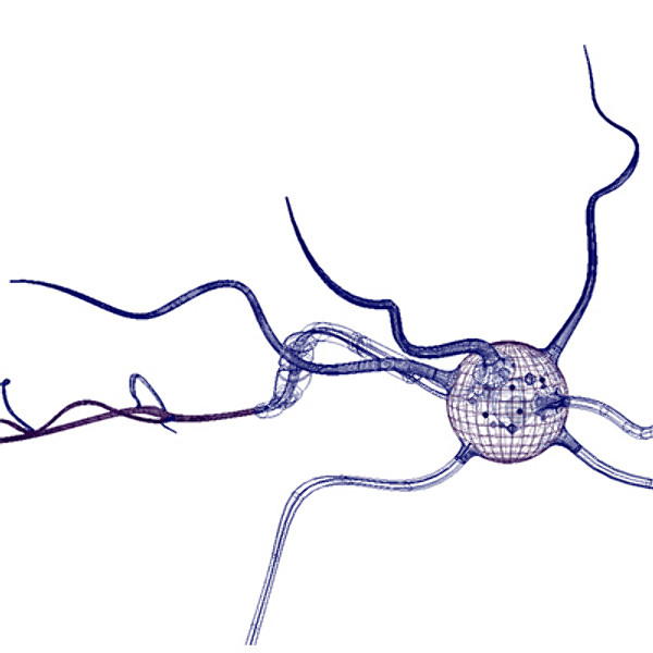 neuron cell dendrites biomedical 3d model.