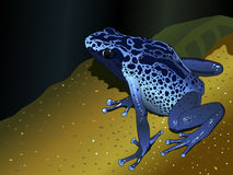 Dendrobates Stock Illustrations.