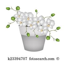 Dendrobium Illustrations and Clipart. 6 dendrobium royalty free.