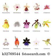 Dendrobium Clip Art EPS Images. 23 dendrobium clipart vector.