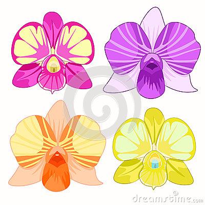 Dendrobium Stock Illustrations.