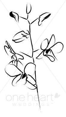 Dendrobium Accent Sketch.