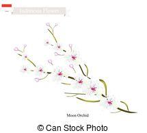 Dendrobium Vector Clip Art EPS Images. 23 Dendrobium clipart.