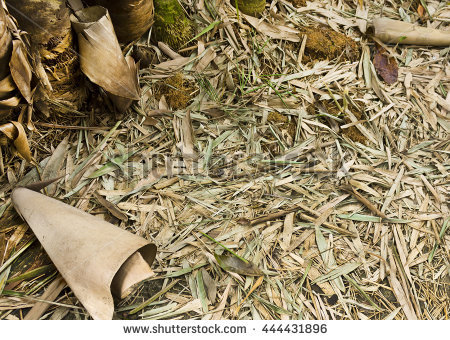 Dried Bamboo Leaves Stock Photos, Royalty.
