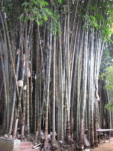 1000+ images about Bamboe / bamboo on Pinterest.