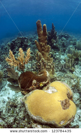 Pillar Coral Stock Photos, Royalty.