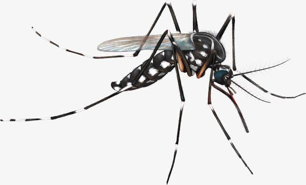 Realistic Black Cartoon Mosquito, Cartoon Clipart, Mosquito Clipart.