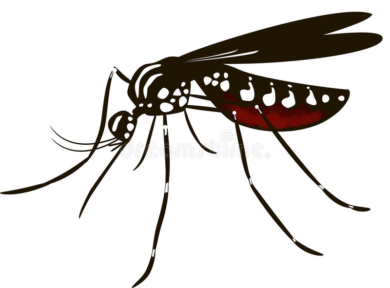 Aedes Mosquito Stock Illustrations.