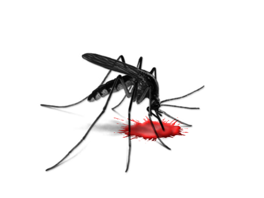 Download slogans on dengue awareness in english clipart Dengue fever.