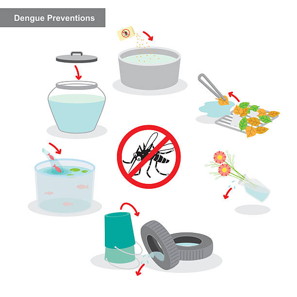 Best Dengue Mosquito Illustrations, Royalty.