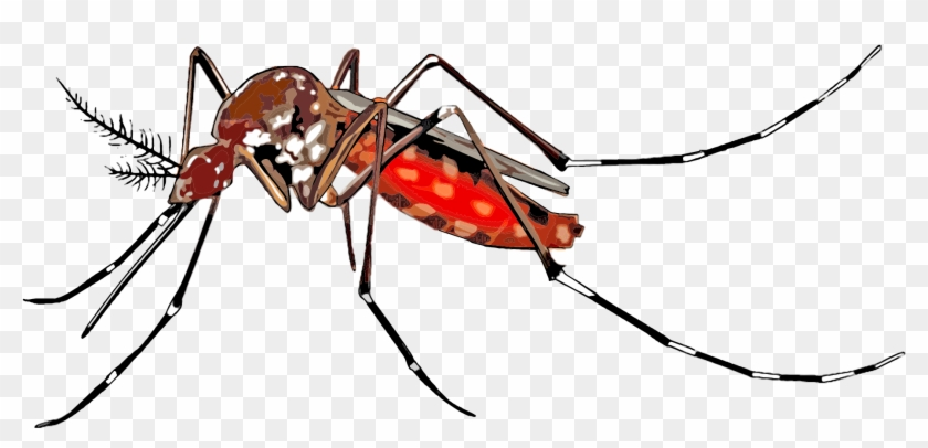 Mosquito Clipart Png.