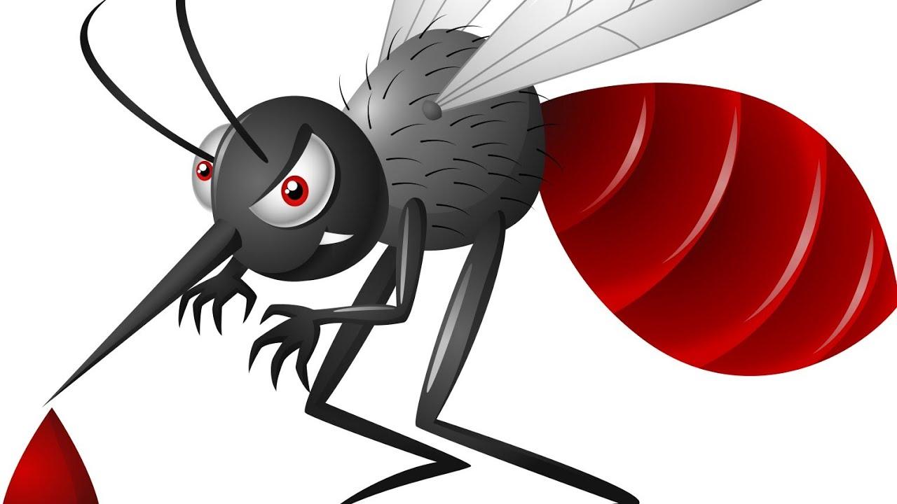 Documentary Film on Dengue Mosquito.