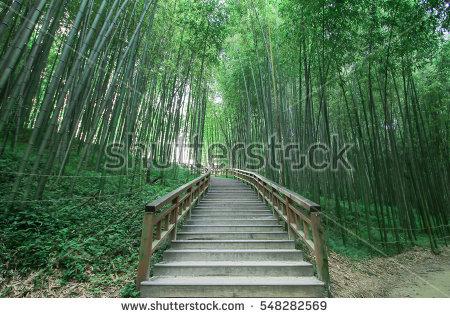 Dense Bamboo Stock Photos, Royalty.